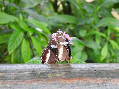 Butterfly Sanctuary, Cairns
