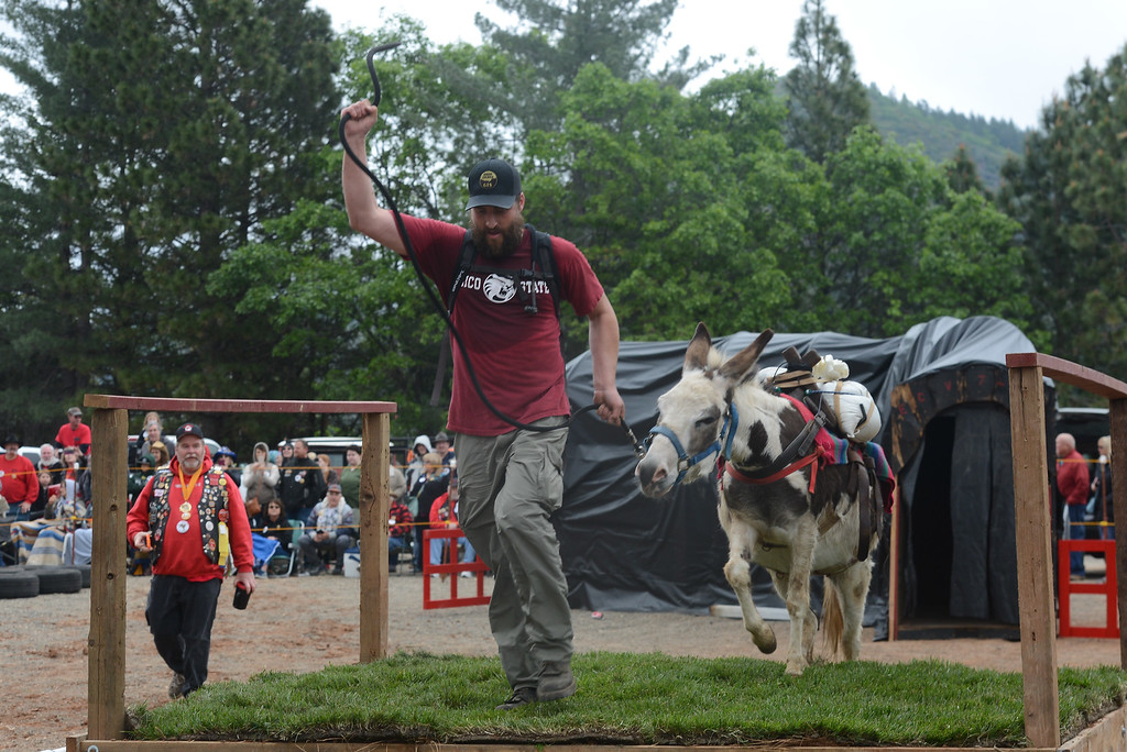 . Henry Schleiger pulls his donkey during the Donkey Derby, April 28, 2018,  in Paradise, California. (Carin Dorghalli -- Enterprise-Record)