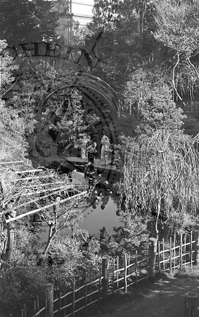 Drum Bridge at The Tea Garden