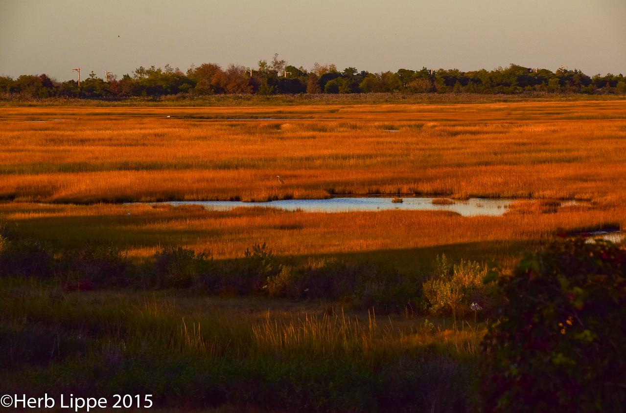Golden Hour Images 10-7-2015-16