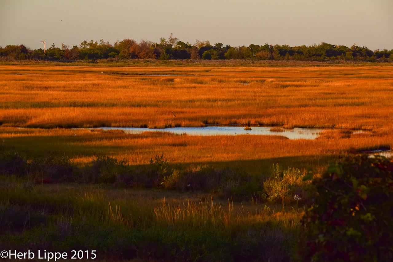 Golden Hour Images 10-7-2015-14