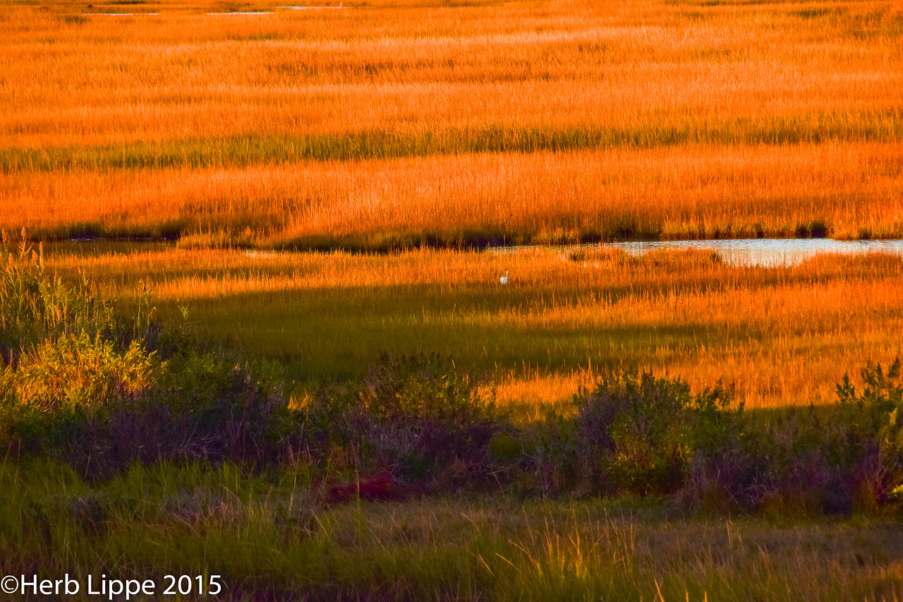Golden Hour Images 10-7-2015-13