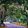 Spanish Moss Trail