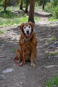 Casey - Happy Dog