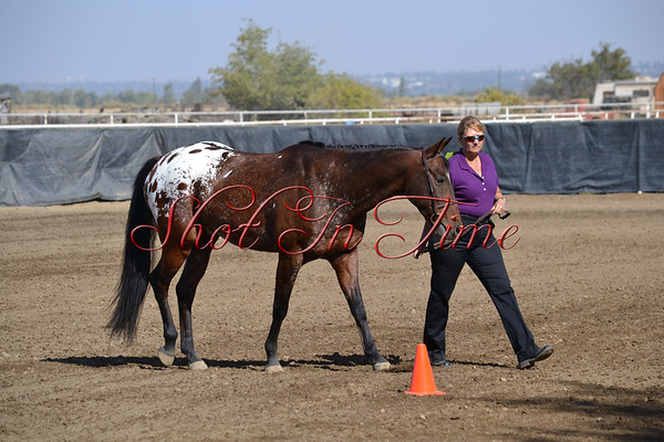 Hunter in Hand and Showmanship