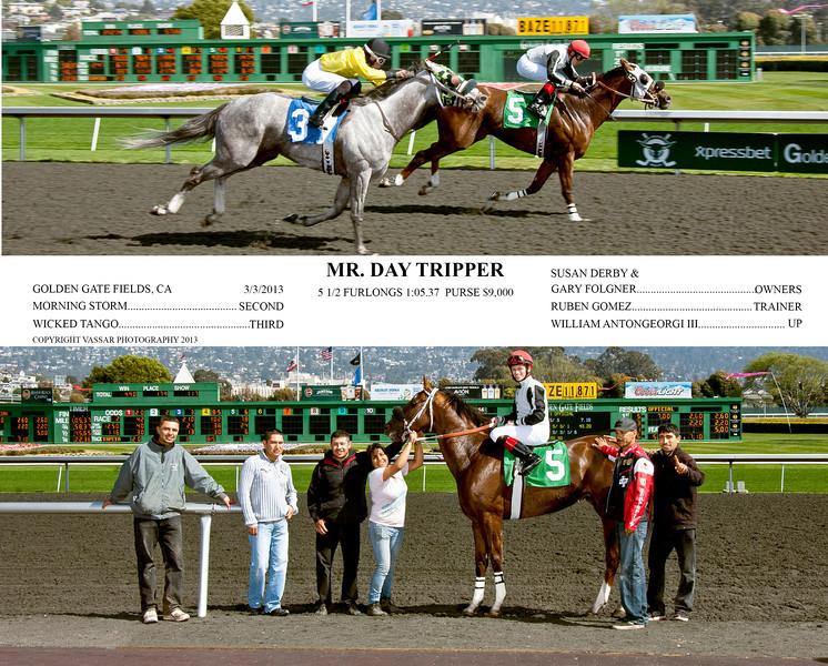 MR DAY TRIPPER