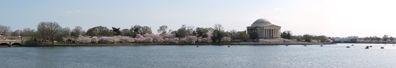 Jefferson Memorial Full Bloom 2013