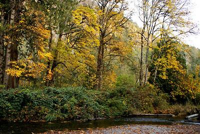 Goldstream Park