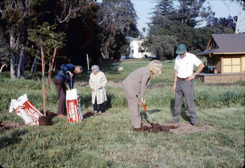Arbor Day tree planting (Little Gardens Club), 3/1986. acc2005.001.0555