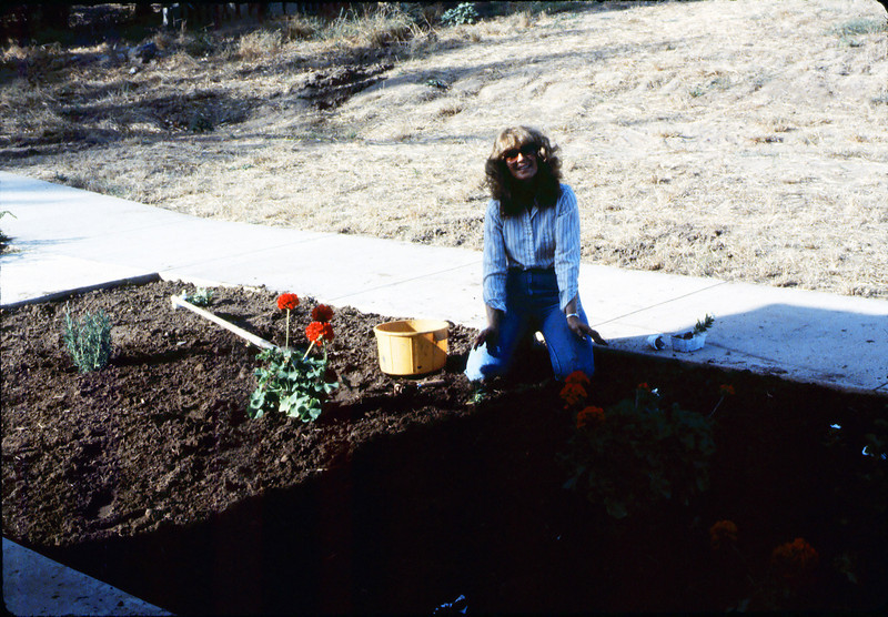Phyllis Olsen planting geraniums in planter in front of Chamber of Commerce office, 7/1983. acc2005.001.0380