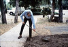 Gene Allen shovels dirt to prepare for miniature-railroad crossing at museum's entry sidewalk, 5/1987. acc2005.001.0794