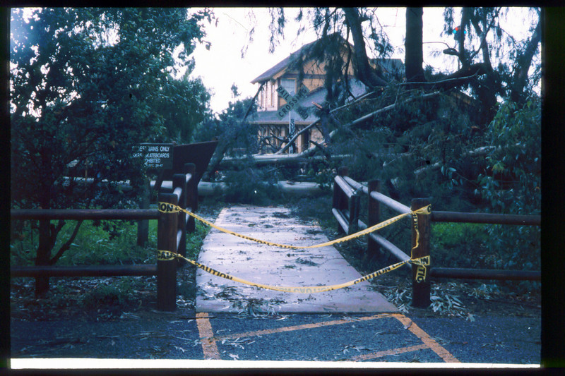 El Nino storms cause trees to fall closing the museum in Feb. 1998. Reported in the museum's Depot Dispatch newsletter, Vol 18, No. 1 (Spring 1998). acc2005.001.2135