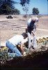 Anna Dato and George Adams plant the flower bed, 6/1987 acc2005.001.0802