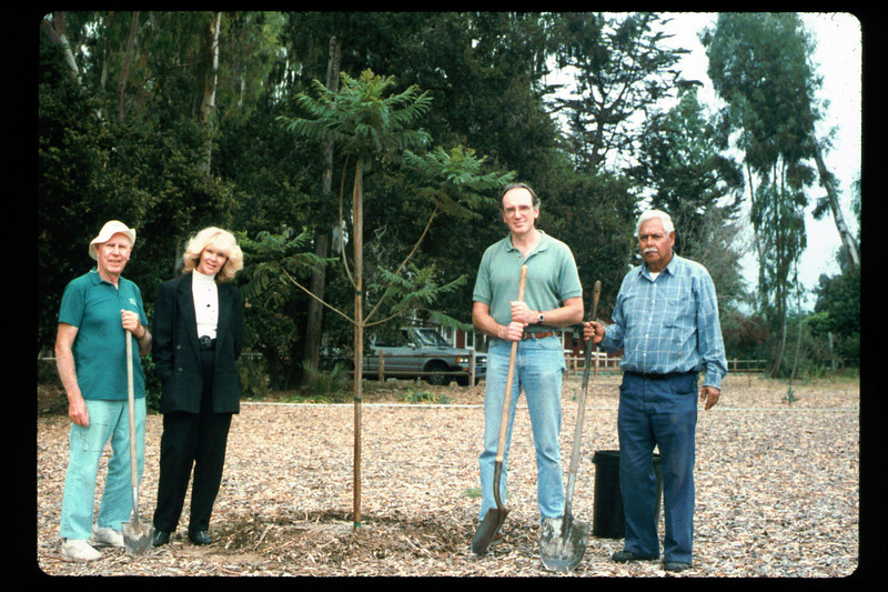Tree is planted (Goleta Beautiful) in memory of the museum's late benefactor, Earl Hill, 1992. acc2005.001.1633