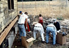 Volunteers pick up old shingles off ground, 6/1982. acc2005.001.0239