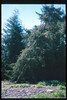 El Nino storms cause trees to fall closing the museum in Feb. 1998. Reported in the museum's Depot Dispatch newsletter, Vol 18, No. 1 (Spring 1998). acc2005.001.2146