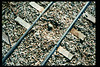 Killdeer birds return in Feb. 1995 to lay eggs between museum-train rails. This occurred the previous year and was reported in the Depot Dispatch, Vol. 14, No. 2 (Summer 1994). acc2005.001.2044