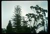 Stow House specimen trees, 1991. acc2005.001.1586