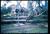 El Nino storms cause trees to fall closing the museum in Feb. 1998. Reported in the museum's Depot Dispatch newsletter, Vol 18, No. 1 (Spring 1998). acc2005.001.2136