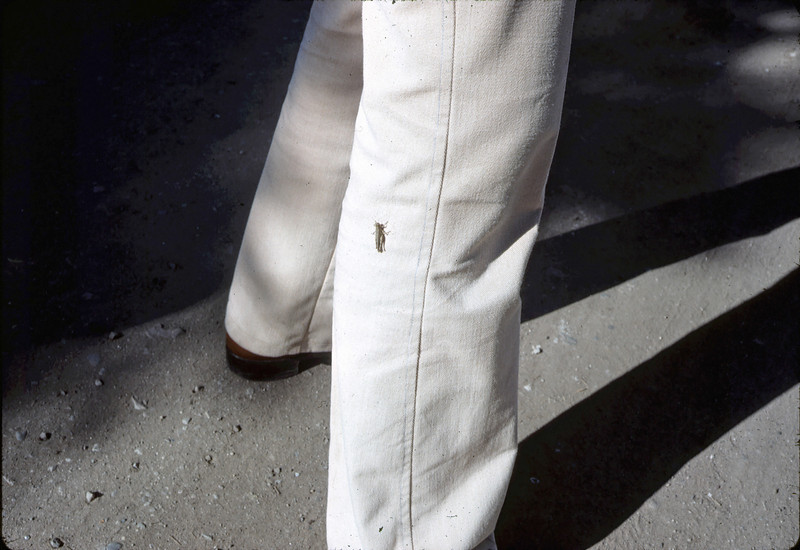 Moving Day, 11/18/1981. A good-luck sign: A cricket lands on Ray Baird's leg.. acc2005.001.0077