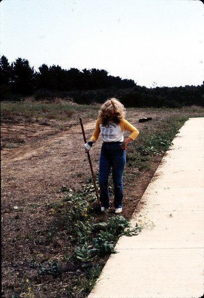 Phyllis Olsen removing weeds around the grounds, ca. 10/1/1983. acc2005.001.0415