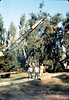 County of Santa Barbara Flood Control crew moves rock for Native Sons plaque, 9/1983.. acc2005.001.0409