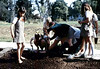 Brownies planting flowers, 1984. acc2005.001.0446