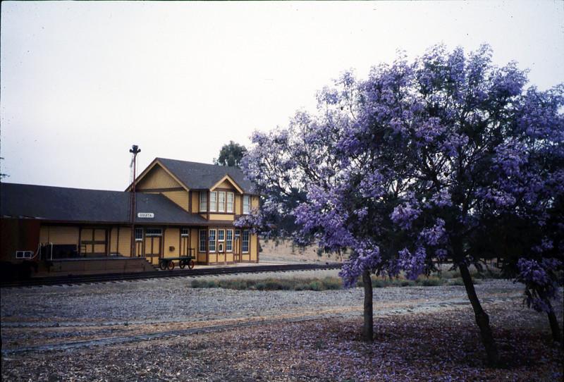 Jacaranda trees in bloom in front of Goleta Depot, 1995. acc2005.001.2077