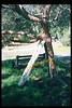 El Nino storms cause trees to fall closing the museum in Feb. 1998. Reported in the museum's Depot Dispatch newsletter, Vol 18, No. 1 (Spring 1998). acc2005.001.2154