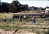 Laying of the standard-gauge track (Gene Allen, Ed Lebeck), 4/2/1985 acc2005.001.0474