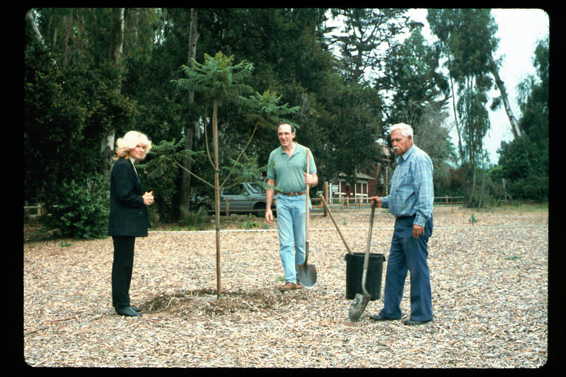 Tree is planted (Goleta Beautiful) in memory of the museum's late benefactor, Earl Hill, 1992. acc2005.001.1634
