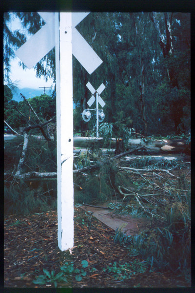 El Nino storms cause trees to fall closing the museum in Feb. 1998. Reported in the museum's Depot Dispatch newsletter, Vol 18, No. 1 (Spring 1998). acc2005.001.2133