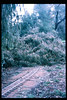 El Nino storms cause trees to fall closing the museum in Feb. 1998. Reported in the museum's Depot Dispatch newsletter, Vol 18, No. 1 (Spring 1998). acc2005.001.2134