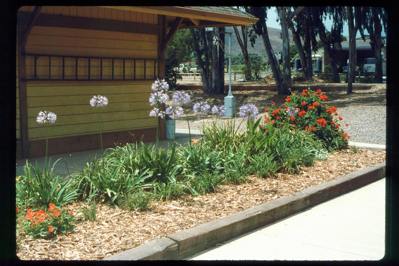 Goleta Depot flower beds, 1991. acc2005.001.1490