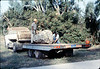 County of Santa Barbara Flood Control truck and crew (Al Jaramillo, left) deliver rock for Native Sons plaque, 9/1983. acc2005.001.0402. acc2005.001.0404