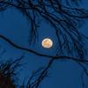 moon 2762