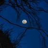 moon 2788