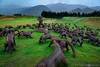 The Hills Golf Club, Arrowtown, New Zealand