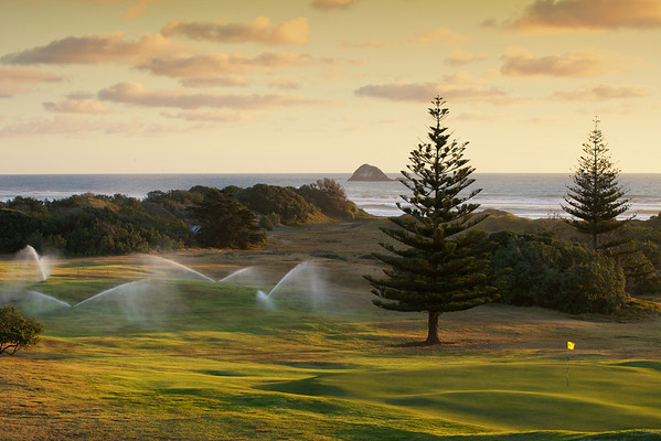 Evening  watering, 9th hole, Muriwai