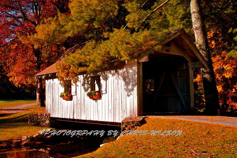 Western NC Fall colors_10-15-12_0081