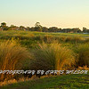 Viera Golf Course  45