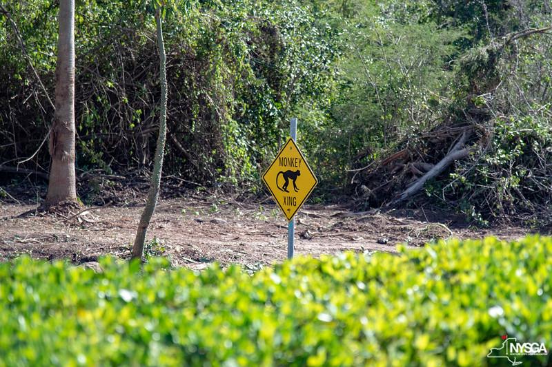 Monkey crossing sign on Nevis