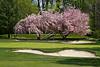 golf course photo©DonnaLovelyPhotos com-8349