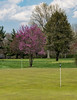 Spring,flowering trees,NewHope,Newtown,TCC, BucksCounty 5-18©DonnaLovelyPhotos com-01304