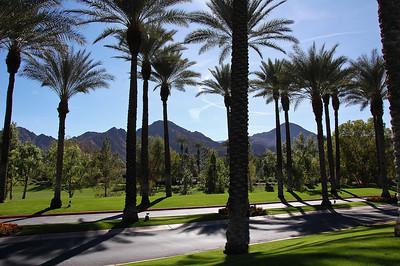 palm-trees-mountains