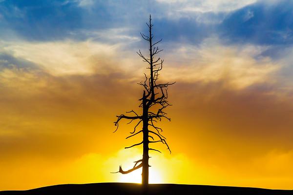 Old MacDonald - Ghost Tree