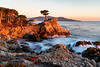 Sunset at the Lone Cypress tree on 17 mile drive in Pebble Beach, California
