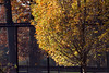 TCC late fall_©DonnaLovelyPhotos com-7428