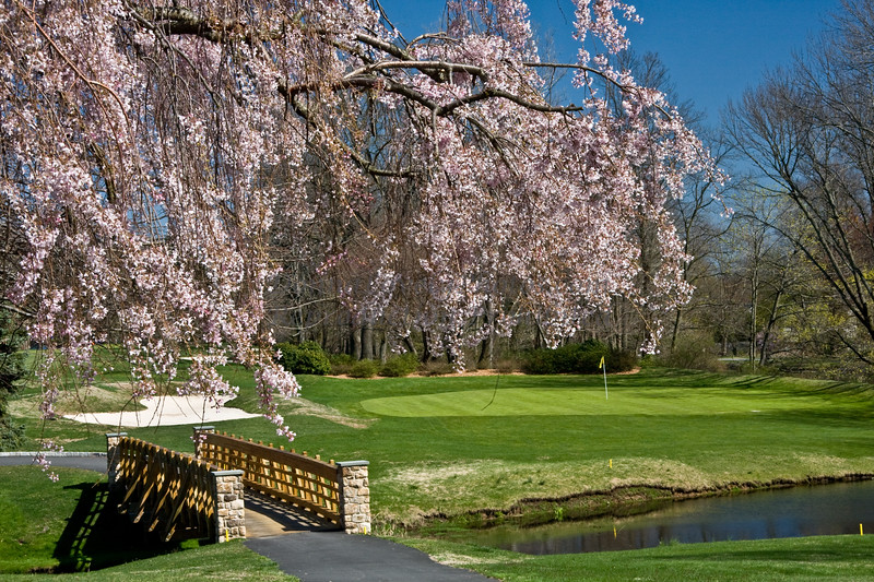 TCC spring trees by Donna Lovely Photos com-8907