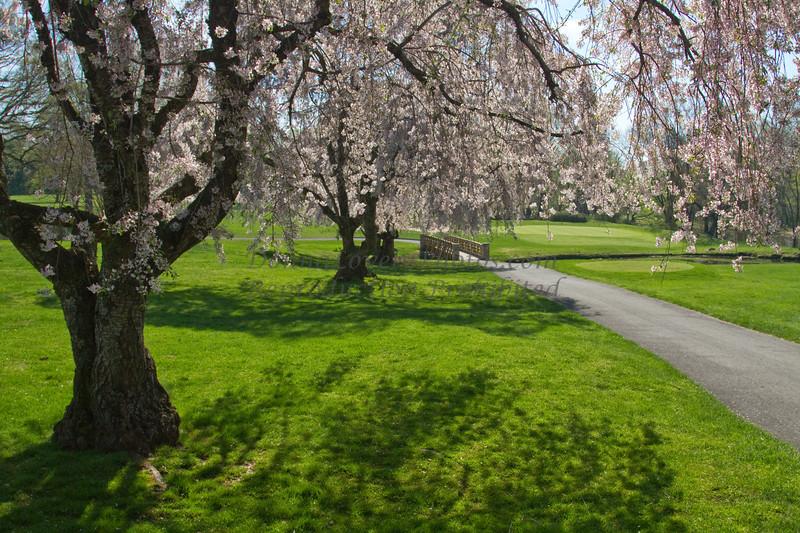 Trenton Country Club spring-8136